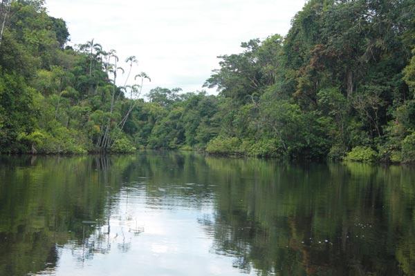 Regenwald, Ecuador