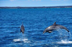 Delfine auf Kreuzfahrt Galapagos