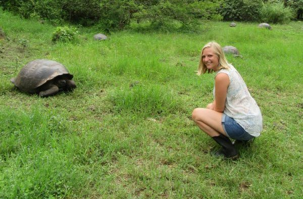 Riesenschildkröte auf Island Hopping Galapagos