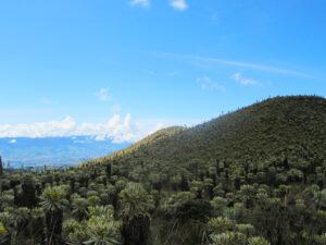 Naturreservat El Angel in Ecuador