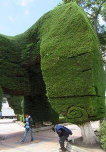 Park mit frisierten Bäumen