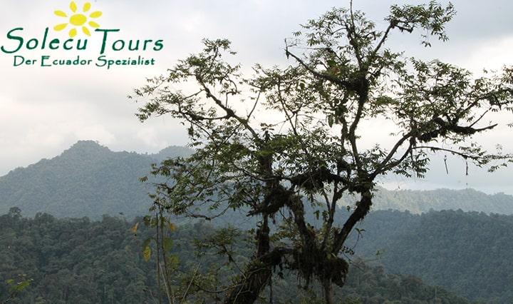Aussicht auf den Nebelwald Ecuadors