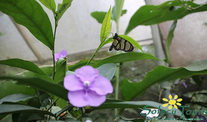 Schmetterlingshaus im Life Center der Mashpi Lodge