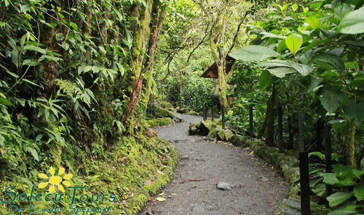 Regenwald Natur Ecuador