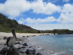 Inselhüpfen auf den Galapagosinseln