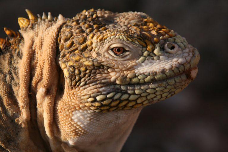 Entdecken Sie die vielfältige Tierwelt auf Galapagos, Ecuador