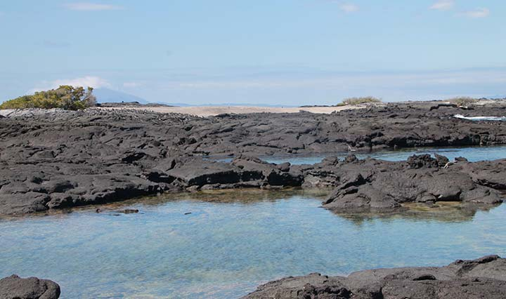 Galapagos Insel Fernandina