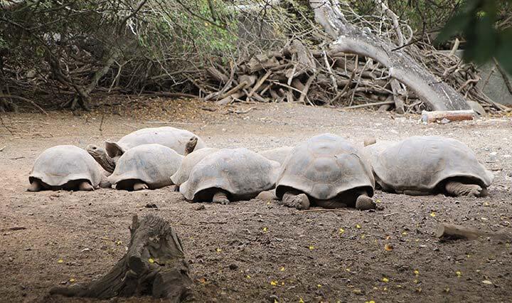 Schildkröten Aufzuchtzentrum auf den Galapagos Inseln
