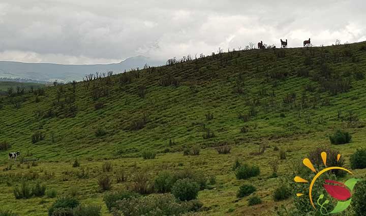 Paramo Landschaft in den Anden in Ecuador