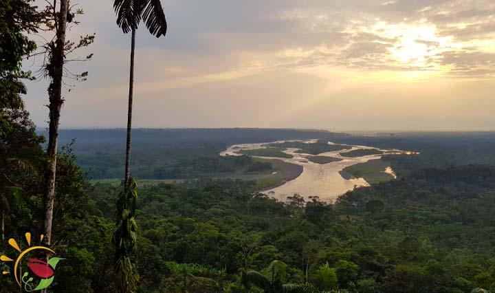 Aussicht auf den Regenwald vom Mirador Indichuris bei Puyo in Ecuador