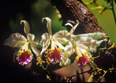 Ein Paradies für Orchideen Liebhaber und Tierbeobachter, Peru