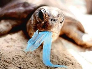Schildkröte, Kolumbien, Plastikmüll