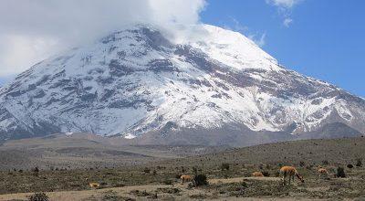 Vicuñas vor dem Chimborazo, dem höchsten Vulkan Ecuadors