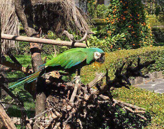 Papagei im Innenhof des Konvents San Franzisco