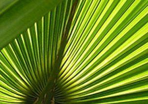 Ecuador hat eine vielfältige Pflanzenwelt zu bieten.