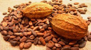 Kakao-Ecuador